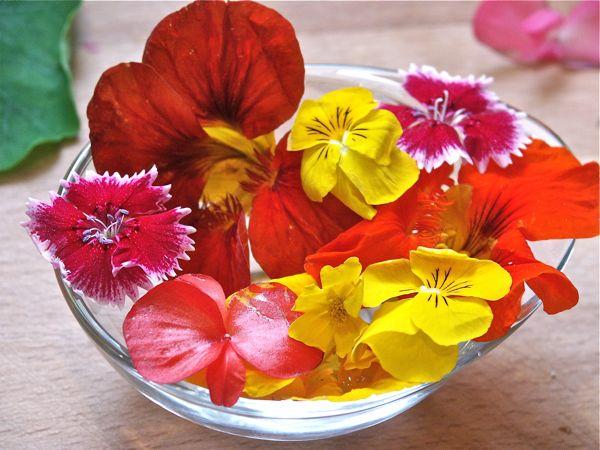 flores en cocina, cata